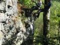 abseilen-bergwacht-aktionstag-260909-in-neureichenau-003.jpg